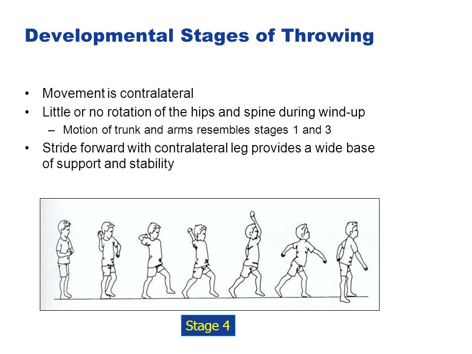 Developmental Stages of Throwing Movement is contralateral Little or no rotation of the hips and spine during wind-up –Motion of trunk and arms resemb