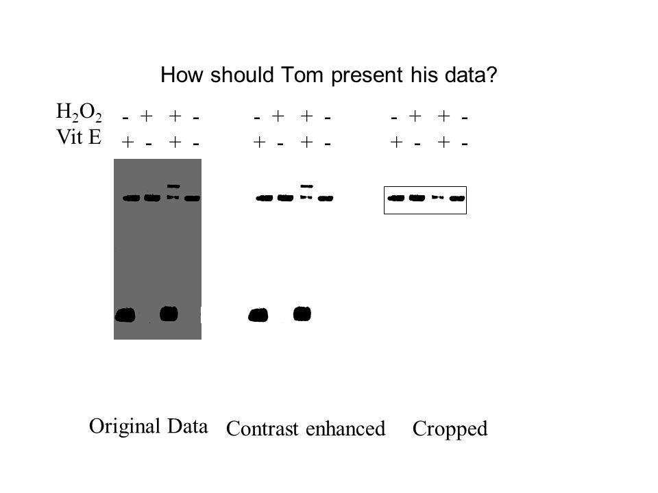 How should Tom present his data.