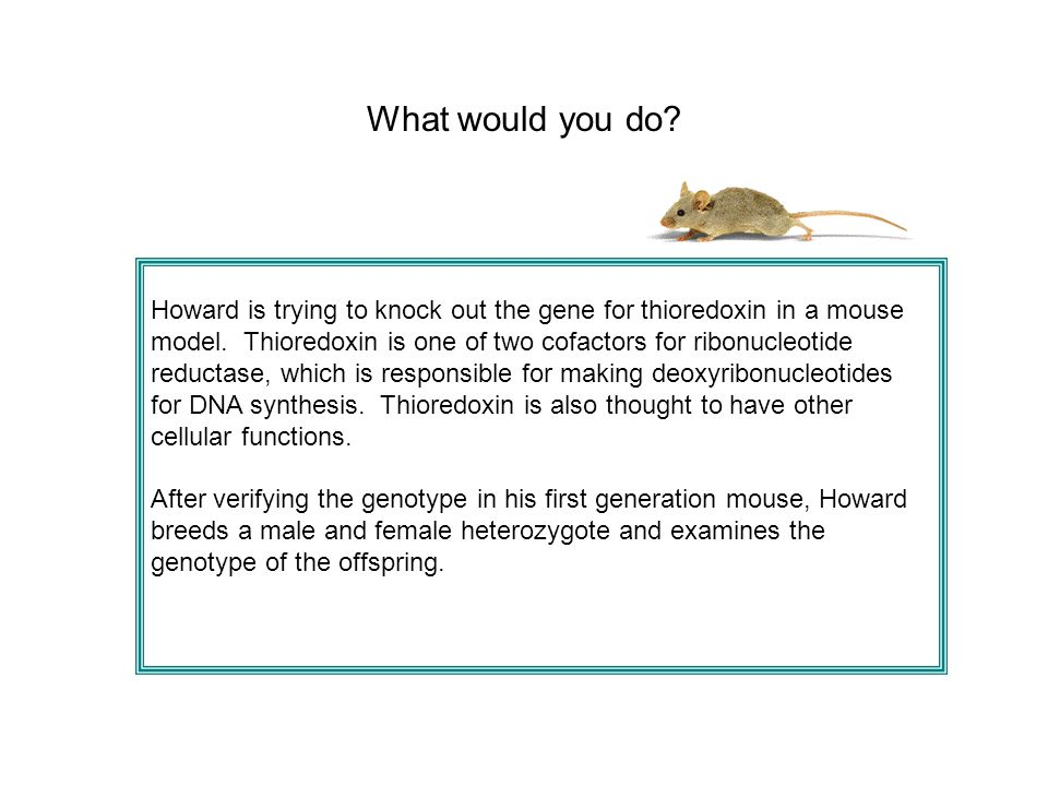 What would you do? Howard is trying to knock out the gene for thioredoxin in a mouse model. Thioredoxin is one of two cofactors for ribonucleotide red