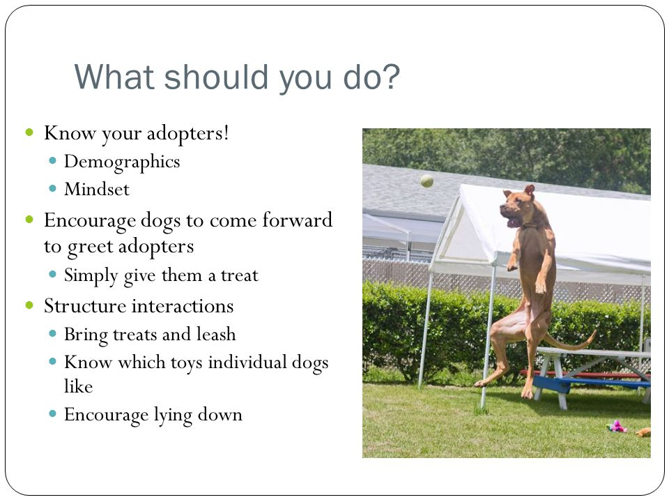 What should you do.Know your adopters.