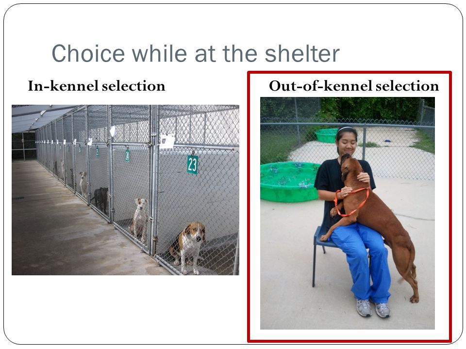 Choice while at the shelter In-kennel selection Out-of-kennel selection