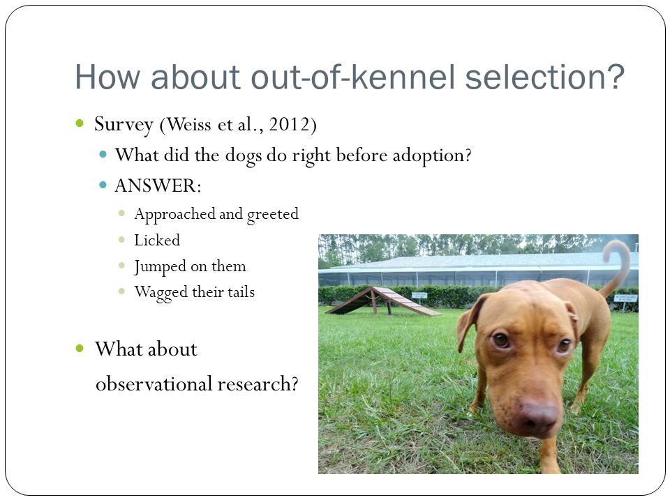 How about out-of-kennel selection.