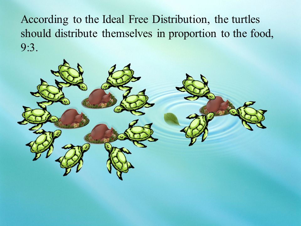 According to the Ideal Free Distribution, the turtles should distribute themselves in proportion to the food, 9:3.