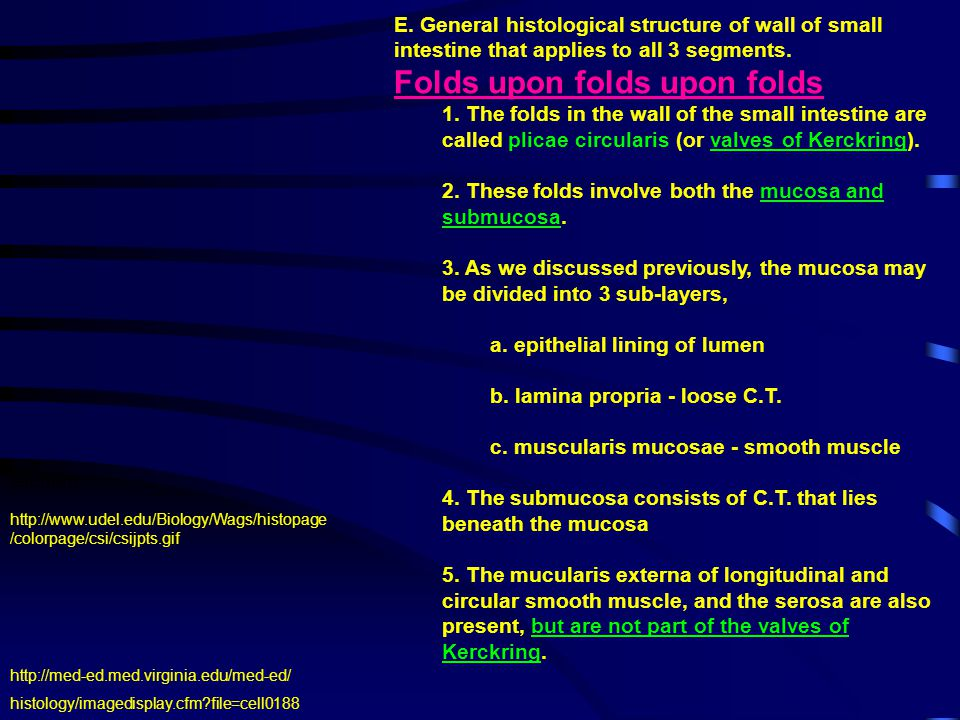 E. General histological structure of wall of small intestine that applies to all 3 segments. Folds upon folds upon folds 1. The folds in the wall of t