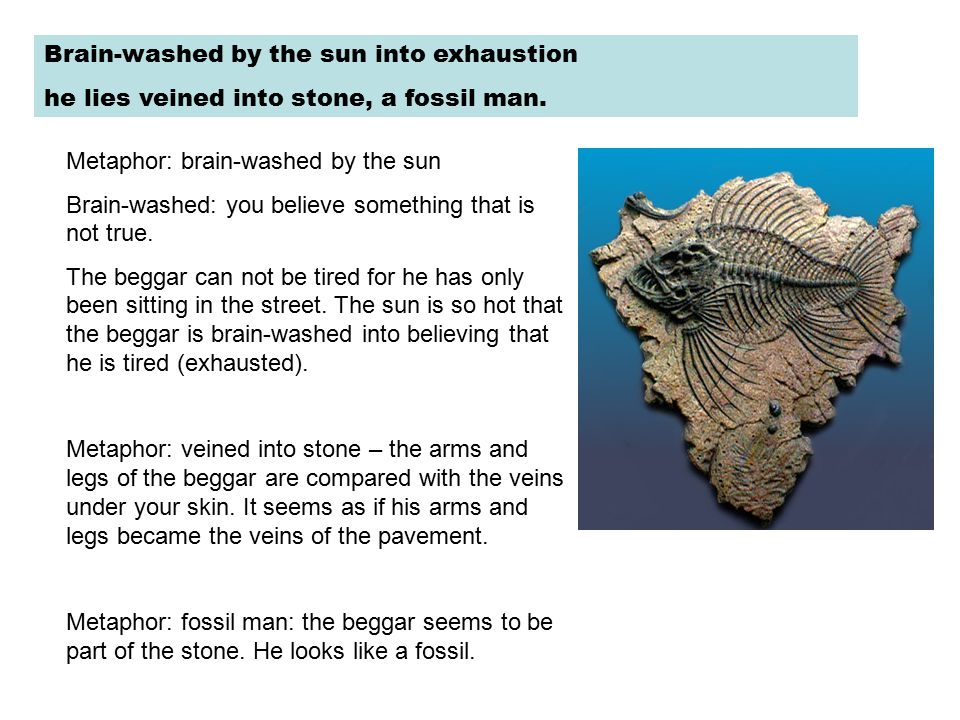 Brain-washed by the sun into exhaustion he lies veined into stone, a fossil man. Metaphor: brain-washed by the sun Brain-washed: you believe something