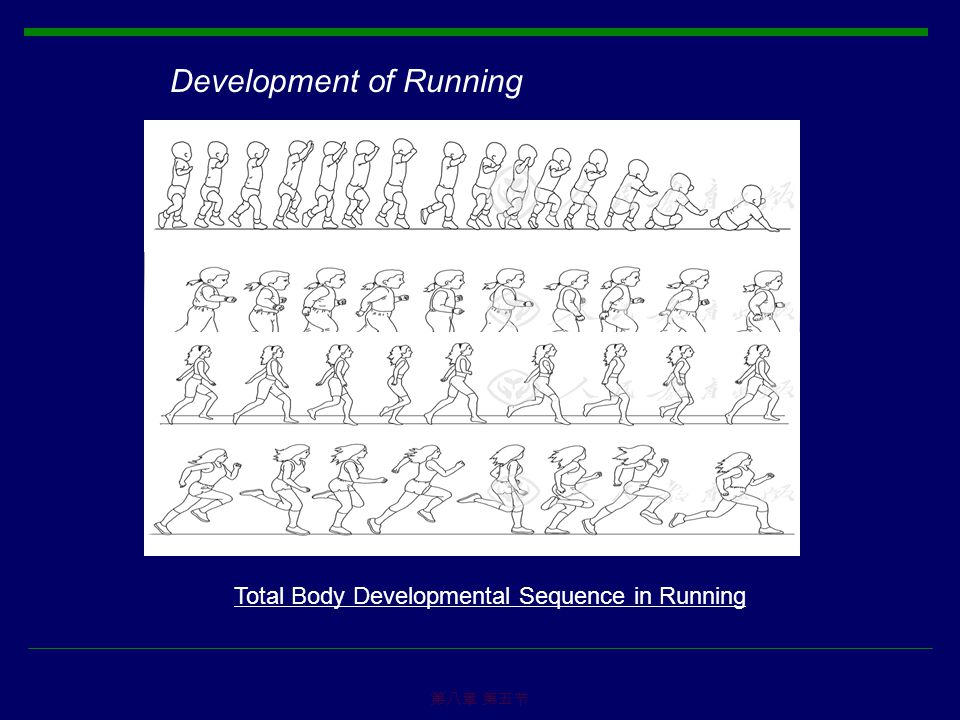 第八章 第五节 Development of Running Total Body Developmental Sequence in Running