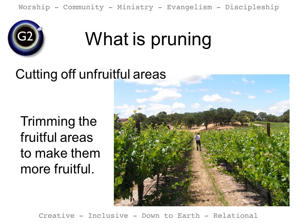 What is pruning Cutting off unfruitful areas Trimming the fruitful areas to make them more fruitful.