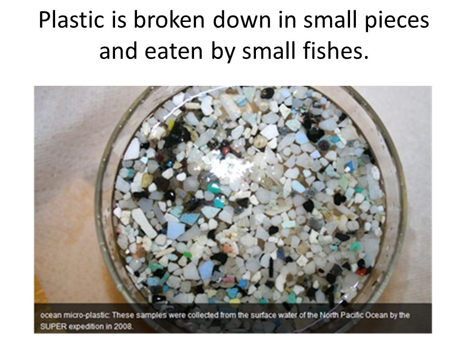 Plastic is broken down in small pieces and eaten by small fishes.