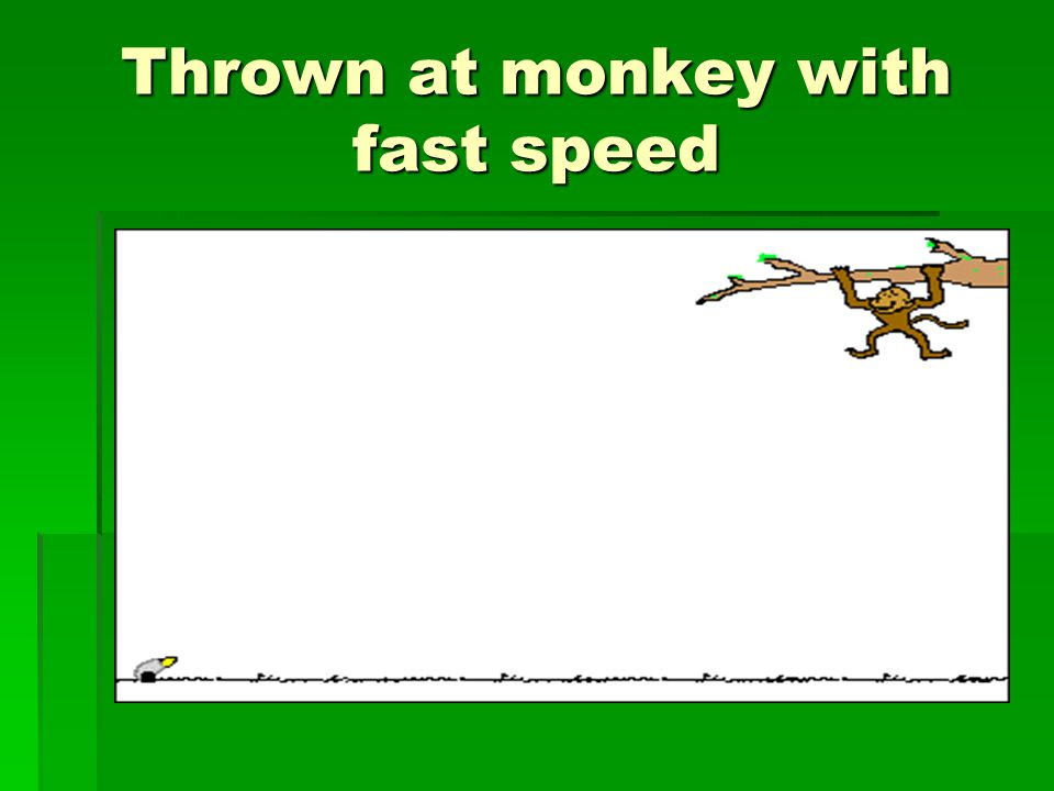 Thrown at monkey with fast speed