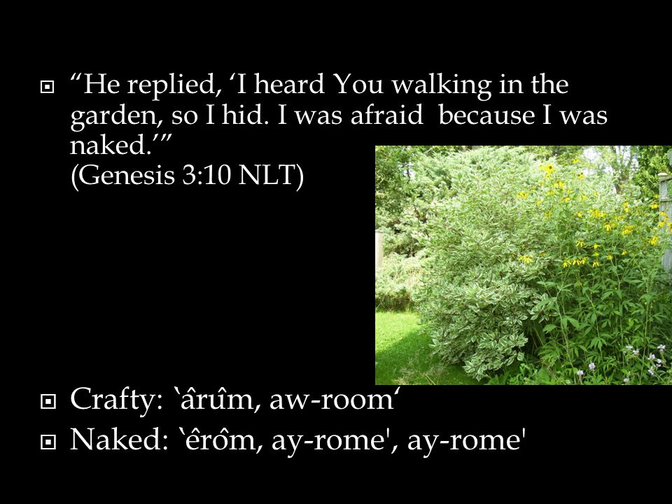 """ """"He replied, 'I heard You walking in the garden, so I hid. I was afraid because I was naked.'"""" (Genesis 3:10 NLT)  Crafty: 'a ̂ ru ̂ m, aw-room' """