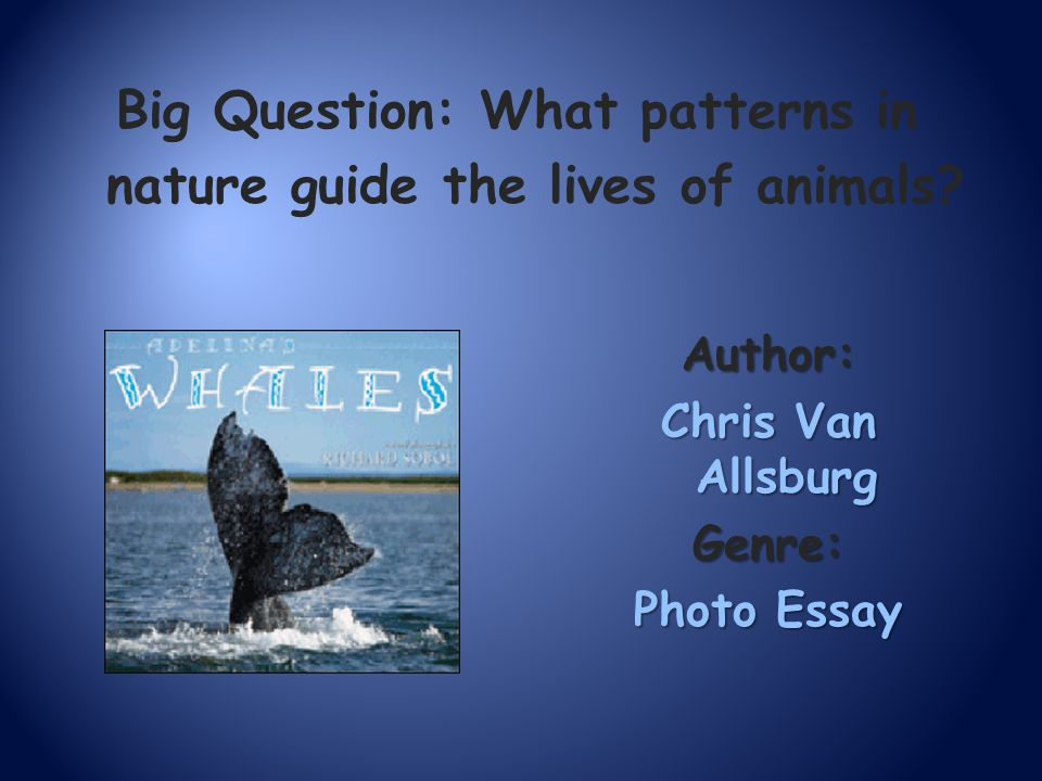 Big Question: What patterns in nature guide the lives of animals? Author: Chris Van Allsburg Genre: Photo Essay