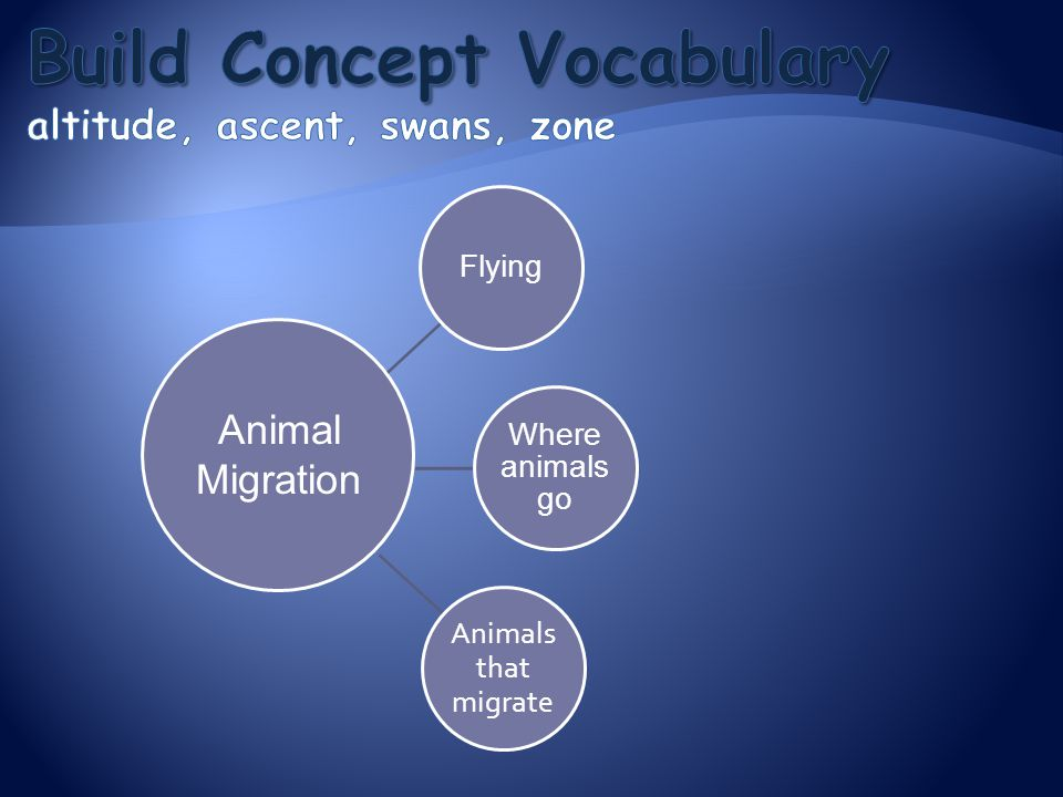 Flying Where animals go Animals that migrate Animal Migration