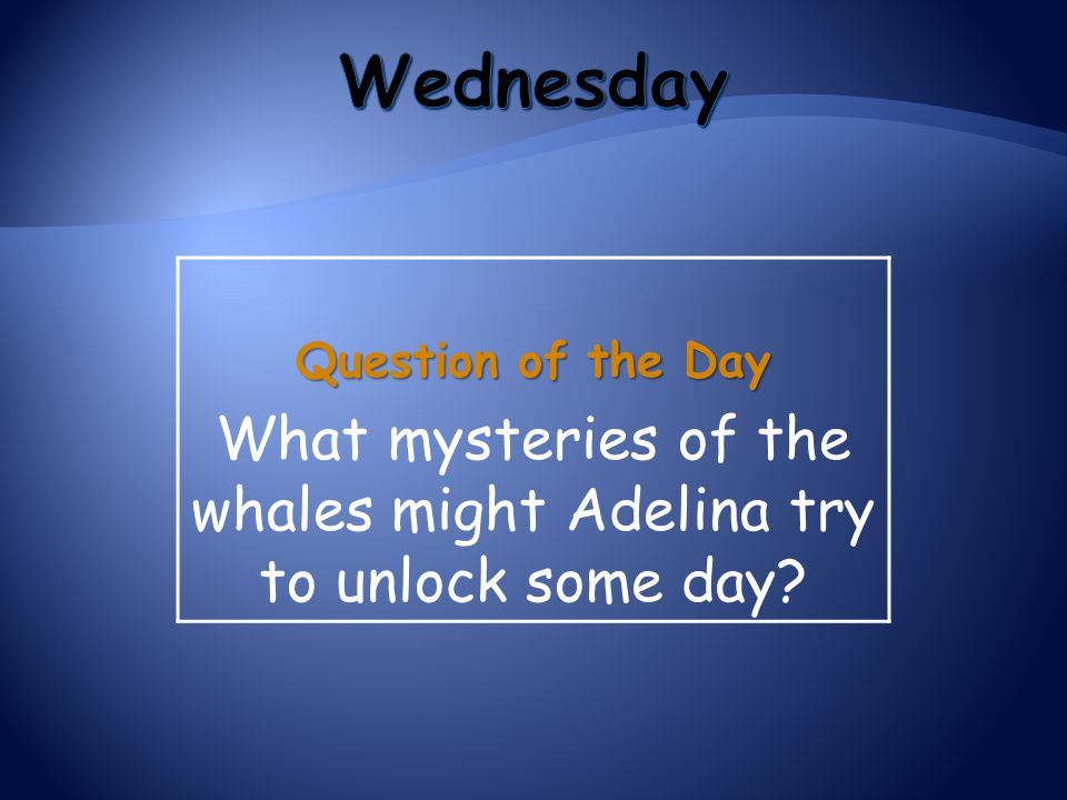 Question of the Day What mysteries of the whales might Adelina try to unlock some day?