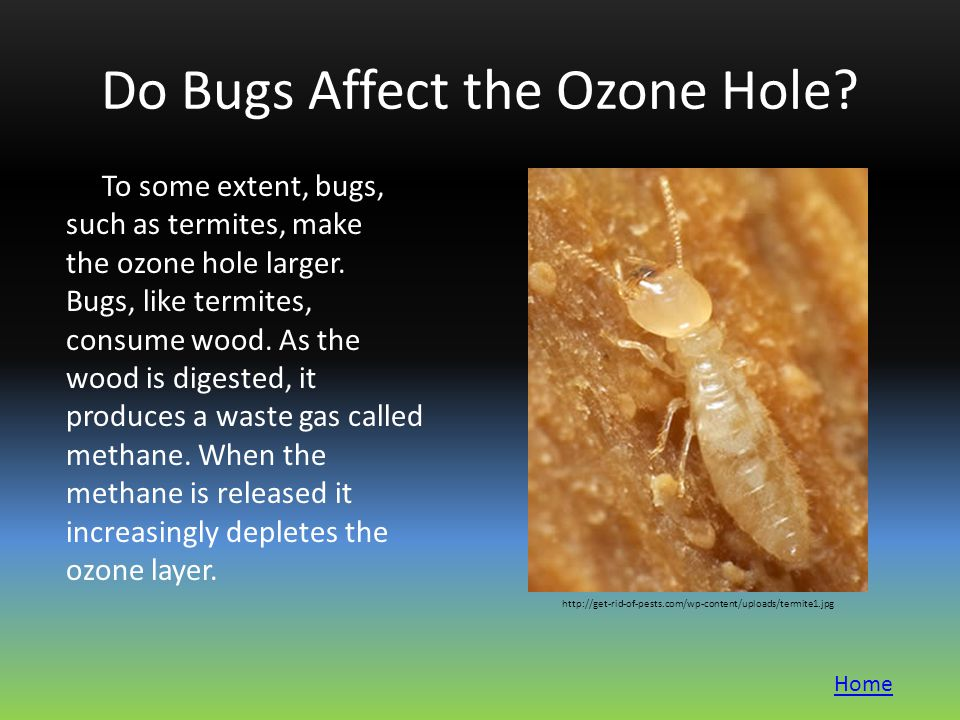 Do Bugs Affect the Ozone Hole. To some extent, bugs, such as termites, make the ozone hole larger.