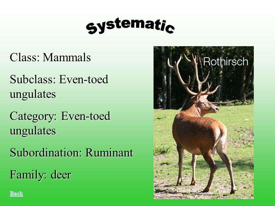 Class: Mammals Subclass: Even-toed ungulates Category: Even-toed ungulates Subordination: Ruminant Family: deer Back