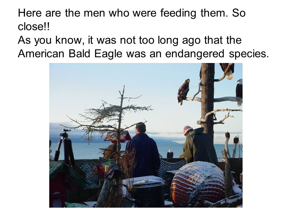 Here are the men who were feeding them. So close!.