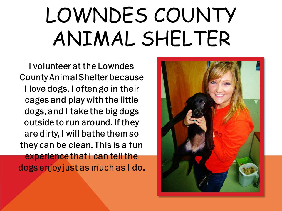 LOWNDES COUNTY ANIMAL SHELTER I volunteer at the Lowndes County Animal Shelter because I love dogs.