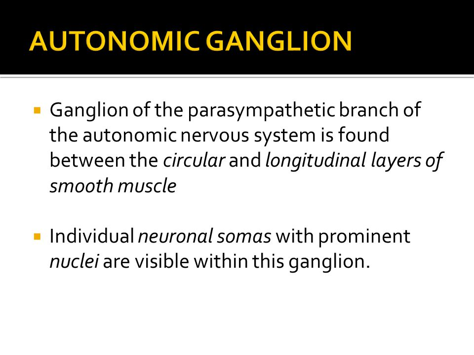  Ganglion of the parasympathetic branch of the autonomic nervous system is found between the circular and longitudinal layers of smooth muscle  Individual neuronal somas with prominent nuclei are visible within this ganglion.