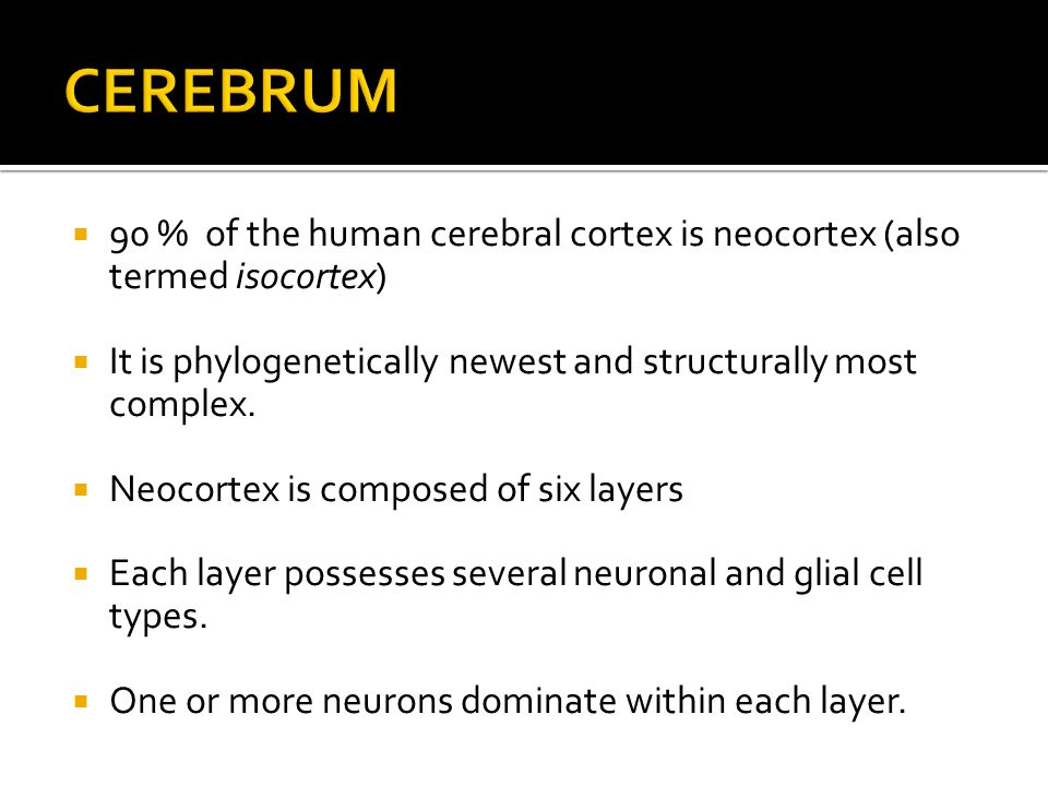 90 % of the human cerebral cortex is neocortex (also termed isocortex)  It is phylogenetically newest and structurally most complex.