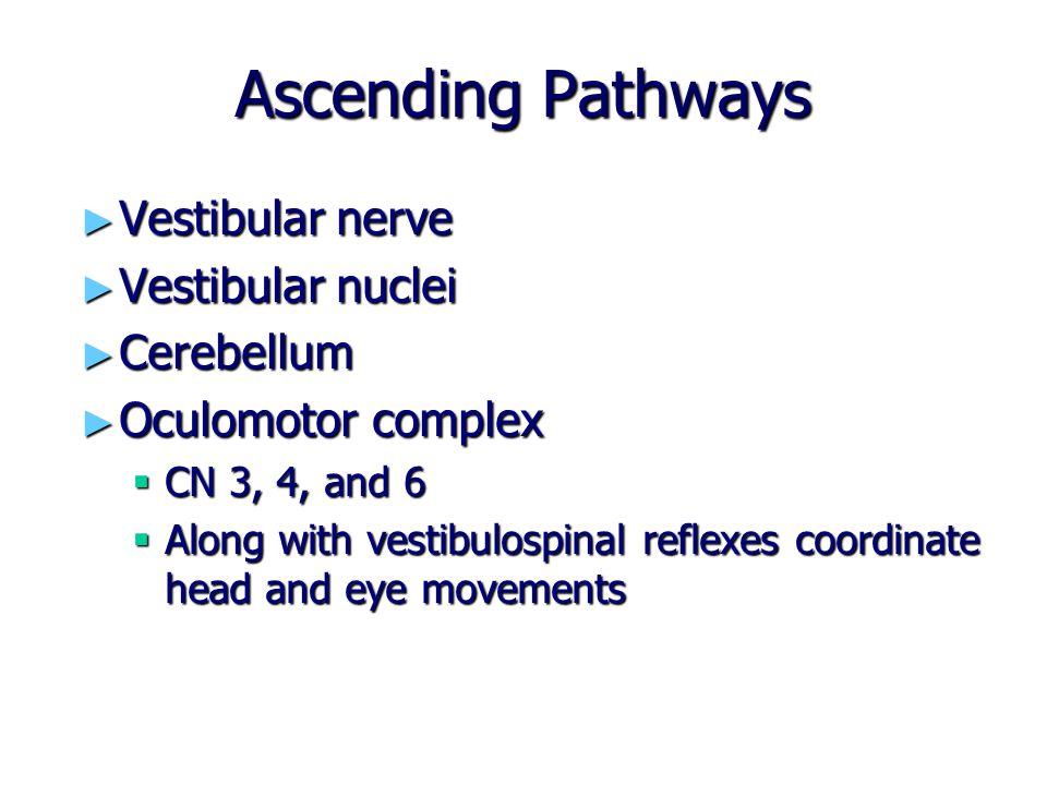 Ascending Pathways ► Vestibular nerve ► Vestibular nuclei ► Cerebellum ► Oculomotor complex  CN 3, 4, and 6  Along with vestibulospinal reflexes coo