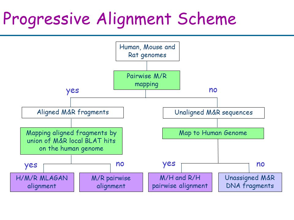 Progressive Alignment Scheme yes no yes no Human, Mouse and Rat genomes Pairwise M/R mapping Aligned M&R fragments Unaligned M&R sequences Map to Human Genome Mapping aligned fragments by union of M&R local BLAT hits on the human genome H/M/R MLAGAN alignment M/R pairwise alignment M/H and R/H pairwise alignment Unassigned M&R DNA fragments yes no