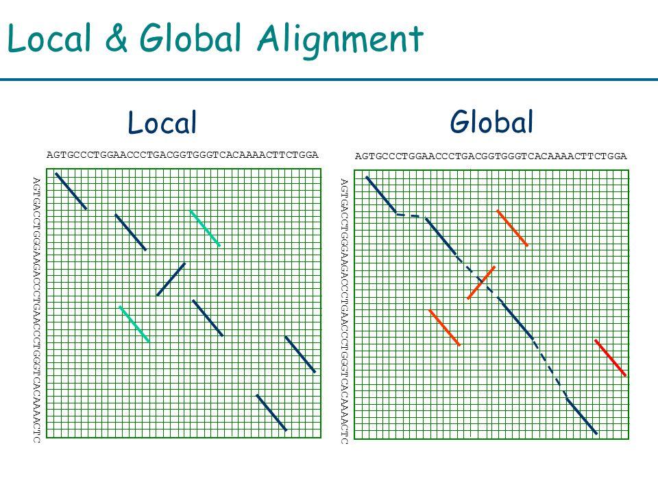 Local & Global Alignment AGTGCCCTGGAACCCTGACGGTGGGTCACAAAACTTCTGGA AGTGACCTGGGAAGACCCTGAACCCTGGGTCACAAAACTC AGTGCCCTGGAACCCTGACGGTGGGTCACAAAACTTCTGGA AGTGACCTGGGAAGACCCTGAACCCTGGGTCACAAAACTC Local Global
