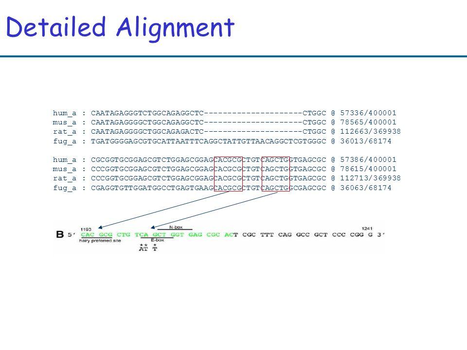 Detailed Alignment hum_a : CAATAGAGGGTCTGGCAGAGGCTC---------------------CTGGC @ 57336/400001 mus_a : CAATAGAGGGGCTGGCAGAGGCTC---------------------CTGGC @ 78565/400001 rat_a : CAATAGAGGGGCTGGCAGAGACTC---------------------CTGGC @ 112663/369938 fug_a : TGATGGGGAGCGTGCATTAATTTCAGGCTATTGTTAACAGGCTCGTGGGC @ 36013/68174 hum_a : CGCGGTGCGGAGCGTCTGGAGCGGAGCACGCGCTGTCAGCTGGTGAGCGC @ 57386/400001 mus_a : CCCGGTGCGGAGCGTCTGGAGCGGAGCACGCGCTGTCAGCTGGTGAGCGC @ 78615/400001 rat_a : CCCGGTGCGGAGCGTCTGGAGCGGAGCACGCGCTGTCAGCTGGTGAGCGC @ 112713/369938 fug_a : CGAGGTGTTGGATGGCCTGAGTGAAGCACGCGCTGTCAGCTGGCGAGCGC @ 36063/68174