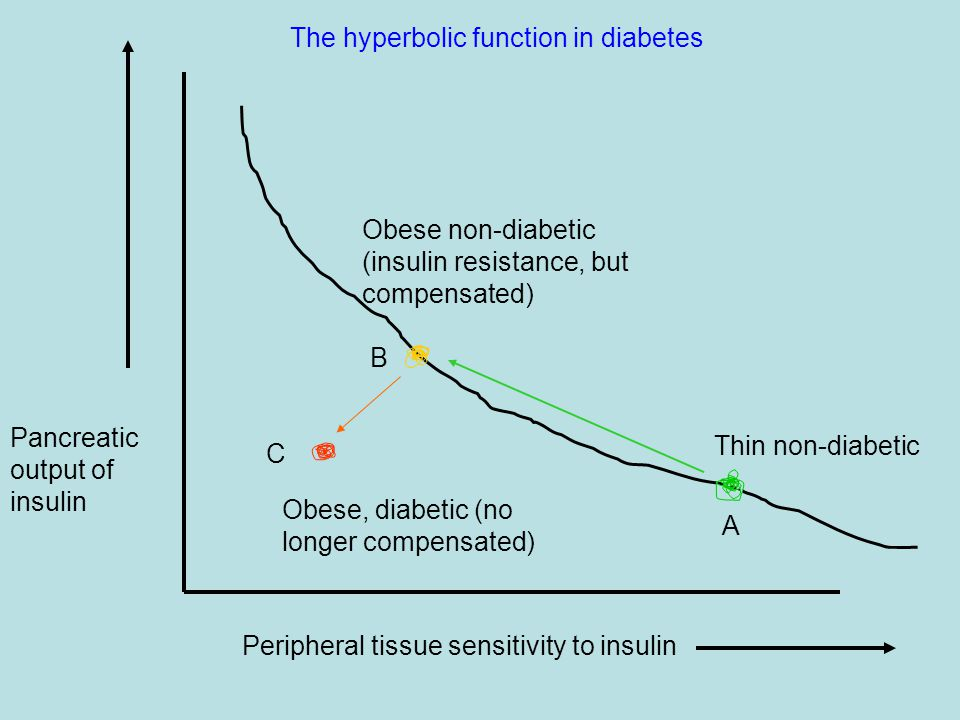 Peripheral tissue sensitivity to insulin Pancreatic output of insulin Thin non-diabetic Obese non-diabetic (insulin resistance, but compensated) B A Obese, diabetic (no longer compensated) C The hyperbolic function in diabetes