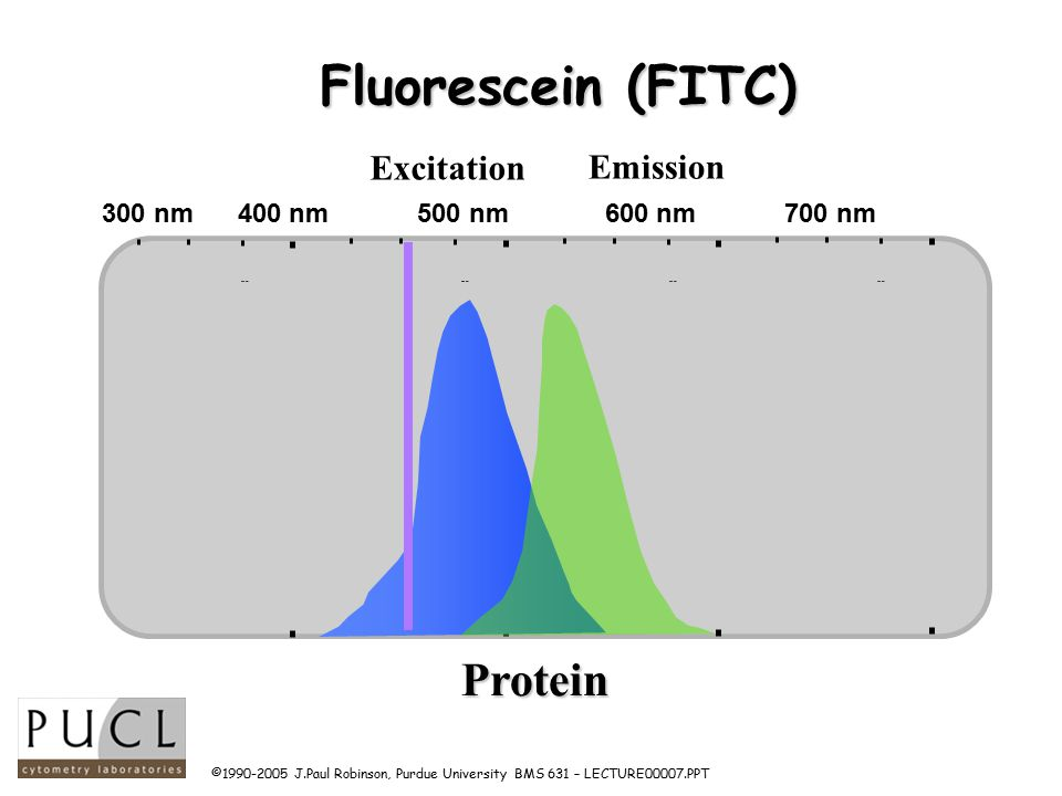 ©1990-2005 J.Paul Robinson, Purdue University BMS 631 – LECTURE00007.PPT Fluorescein (FITC) 400 nm500 nm600 nm700 nm Wavelength Protein Excitation Emission 300 nm 400 nm 500 nm 600 nm 700 nm