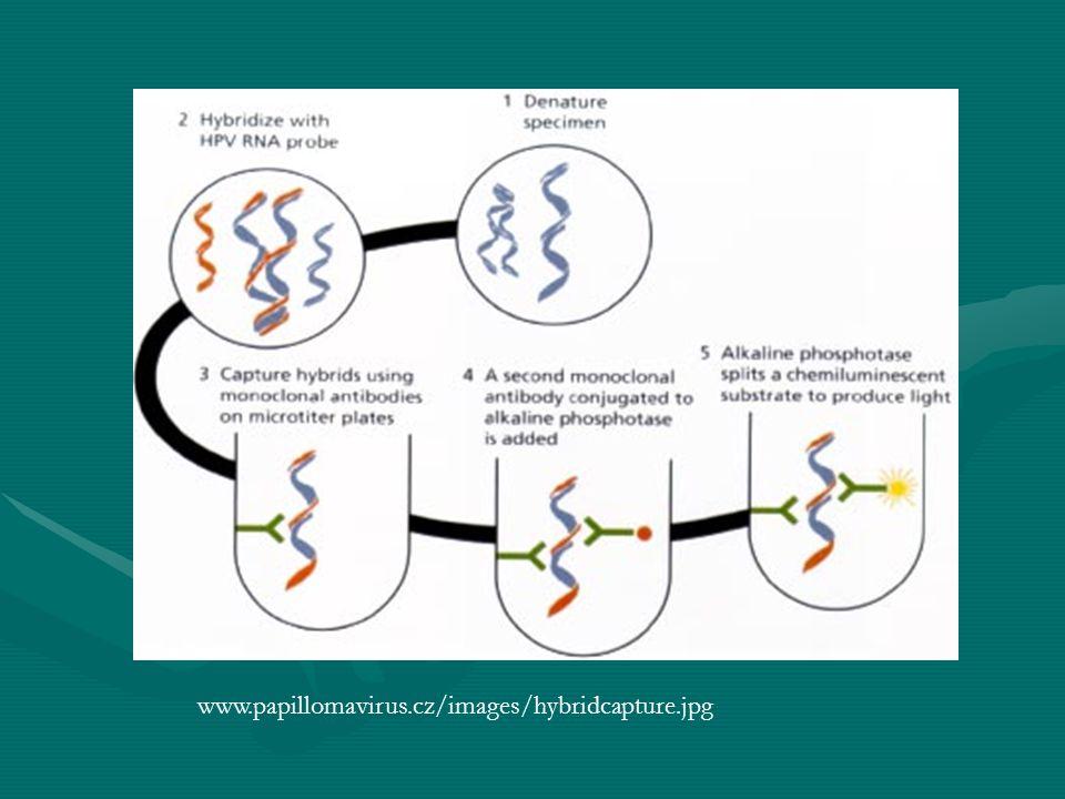 www.papillomavirus.cz/images/hybridcapture.jpg