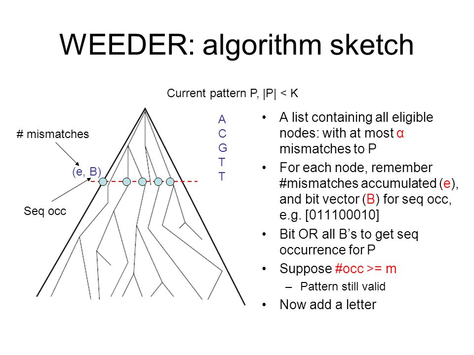 WEEDER: algorithm sketch A list containing all eligible nodes: with at most α mismatches to P For each node, remember #mismatches accumulated (e), and bit vector (B) for seq occ, e.g.