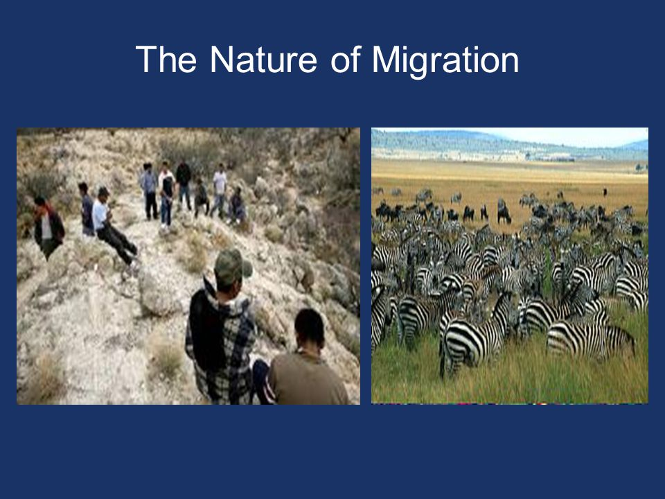 The Nature of Migration
