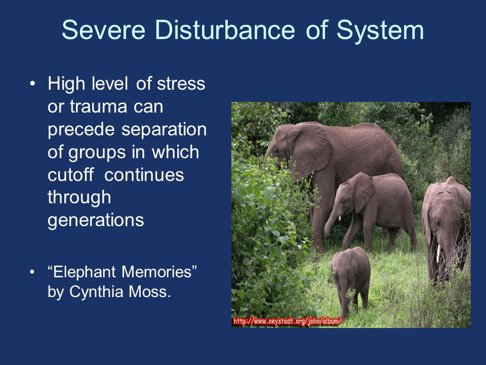 Severe Disturbance of System High level of stress or trauma can precede separation of groups in which cutoff continues through generations Elephant Memories by Cynthia Moss.