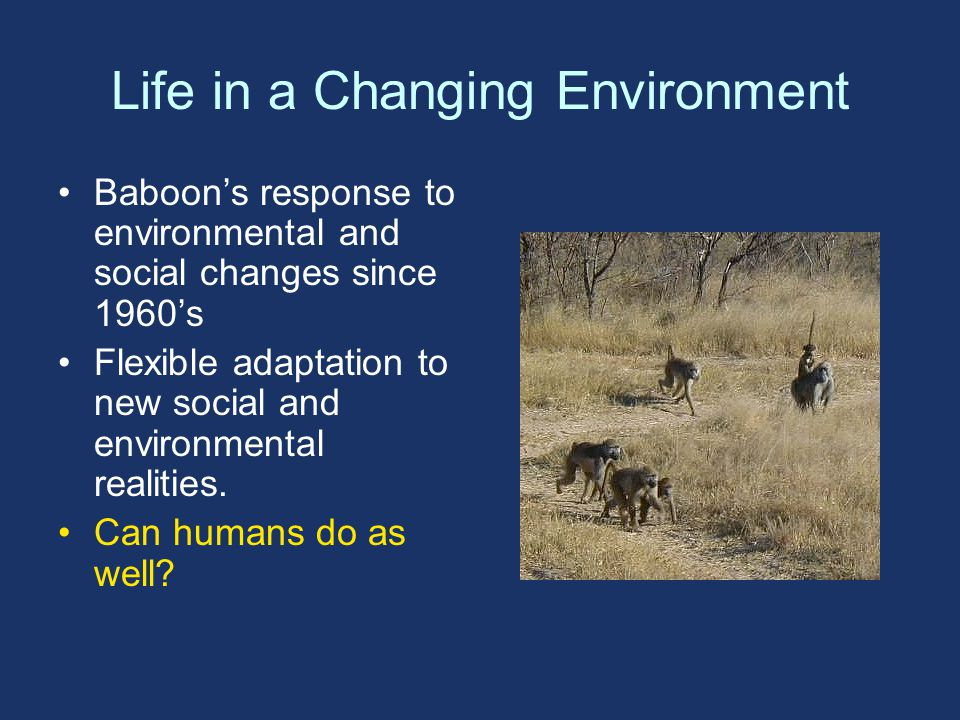 Life in a Changing Environment Baboon's response to environmental and social changes since 1960's Flexible adaptation to new social and environmental realities.