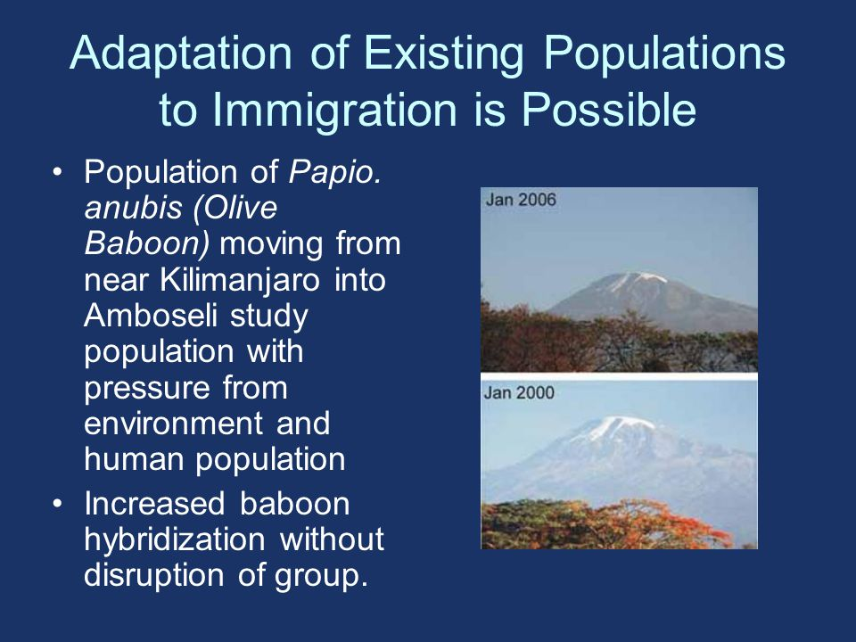 Adaptation of Existing Populations to Immigration is Possible Population of Papio.