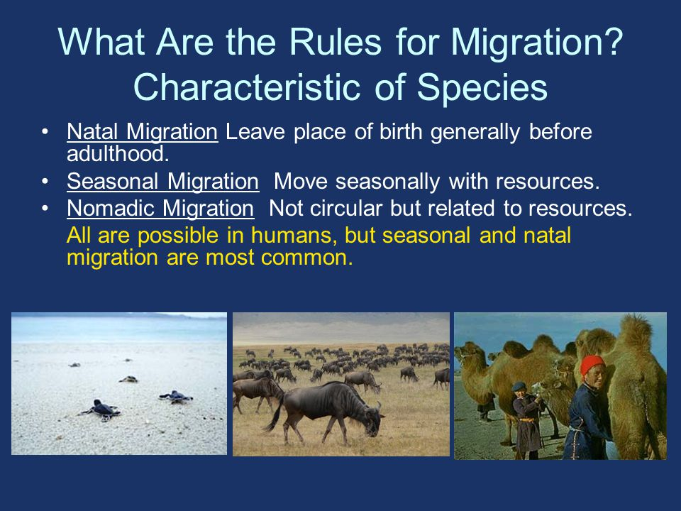 What Are the Rules for Migration.