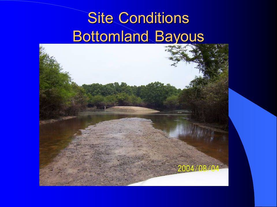 Site Conditions Bottomland Bayous