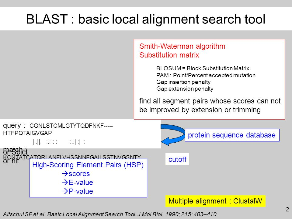 2 BLAST : basic local alignment search tool query : CGNLSTCMLGTYTQDFNKF----- HTFPQTAIGVGAP |.||.