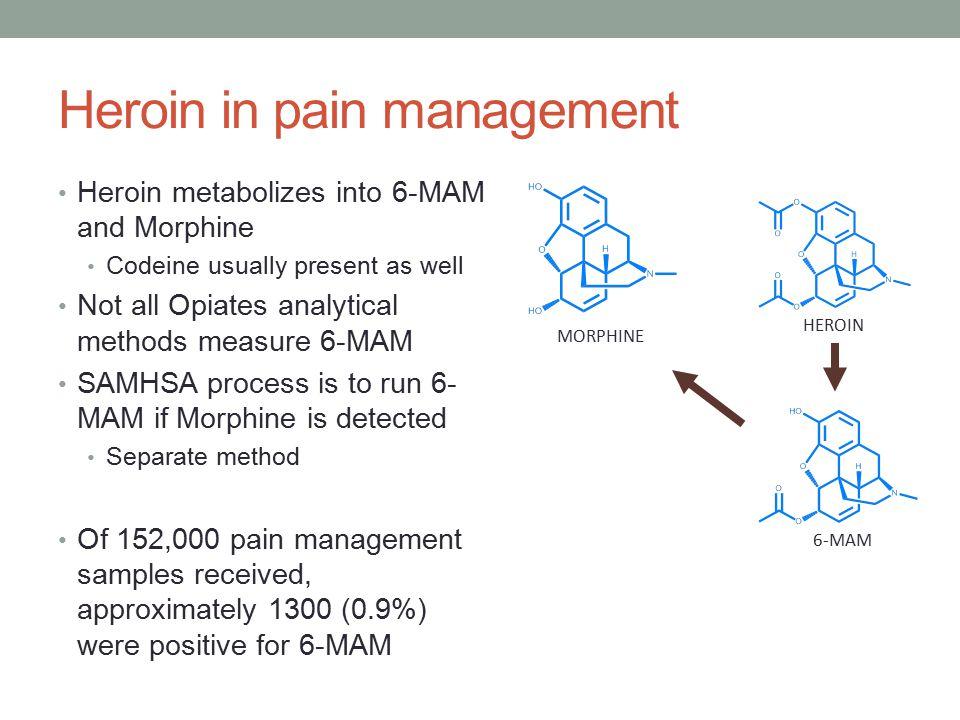Opiate Metabolism (cont.) HYDROCODONE HYDROMORPHONE OXYMORPHONE MORPHINE OXYCODONE