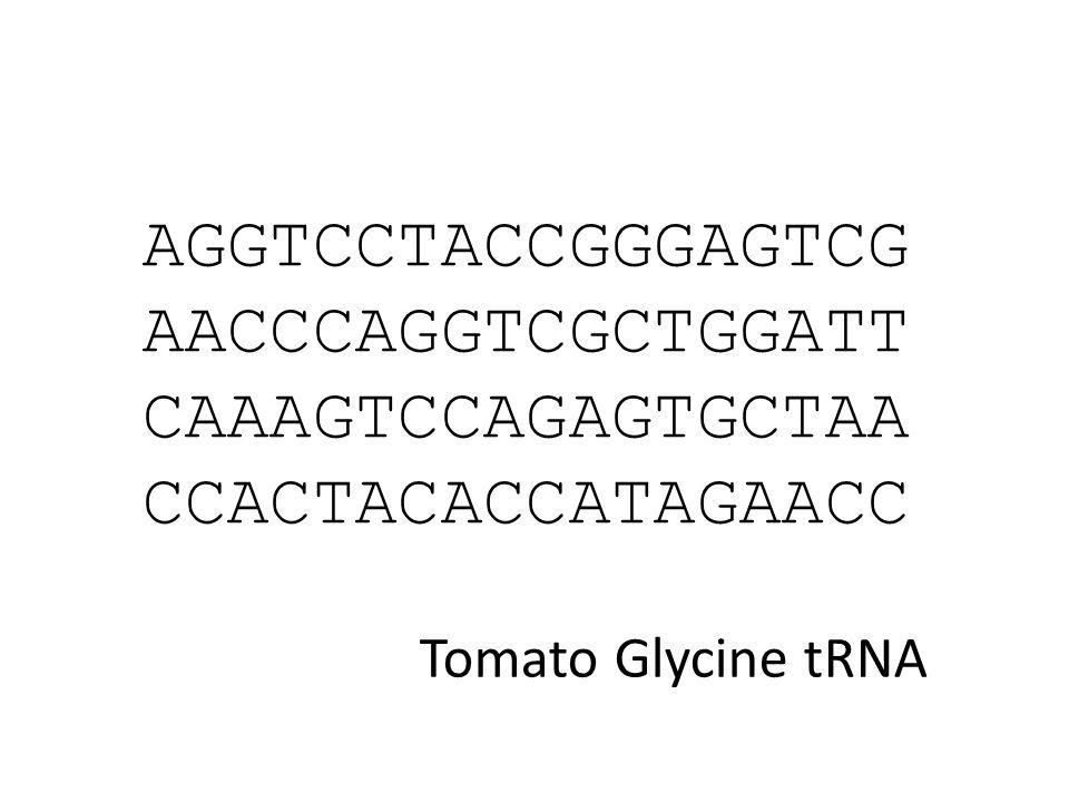 AGGTCCTACCGGGAGTCG AACCCAGGTCGCTGGATT CAAAGTCCAGAGTGCTAA CCACTACACCATAGAACC Tomato Glycine tRNA