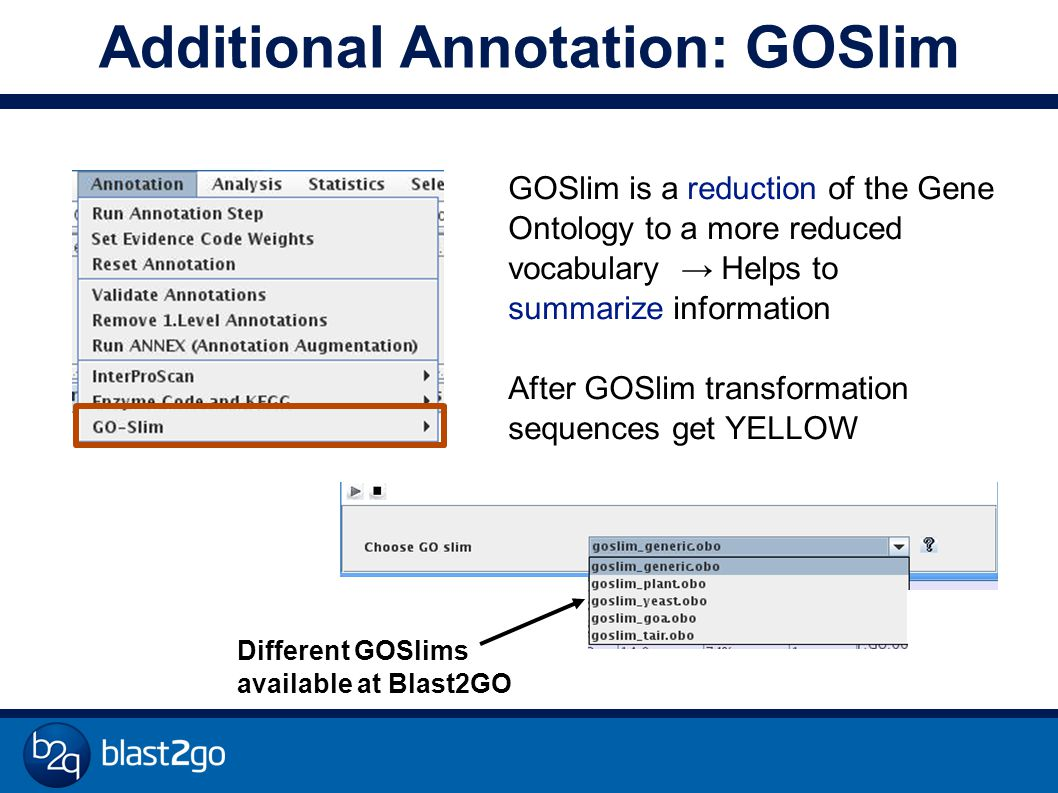 Additional Annotation: GOSlim GOSlim is a reduction of the Gene Ontology to a more reduced vocabulary → Helps to summarize information After GOSlim transformation sequences get YELLOW Different GOSlims available at Blast2GO