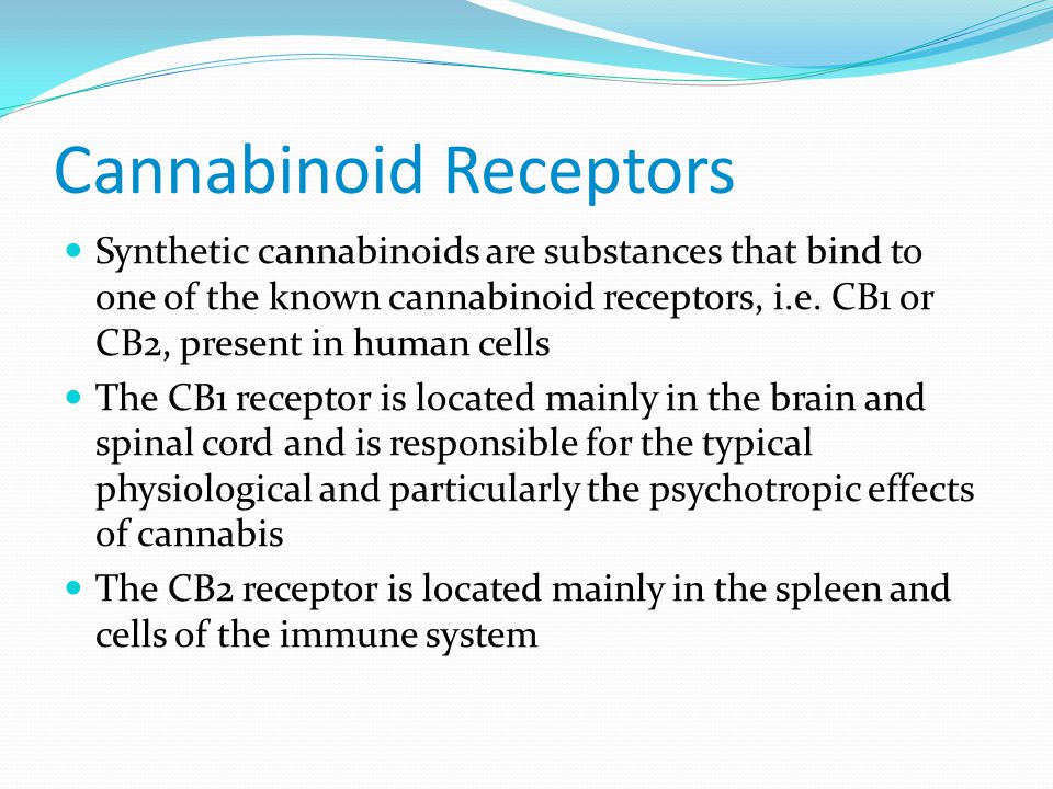 Cannabinoid Receptors Synthetic cannabinoids are substances that bind to one of the known cannabinoid receptors, i.e.