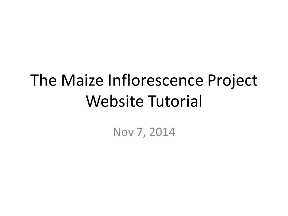 The Maize Inflorescence Project Website Tutorial Nov 7, 2014