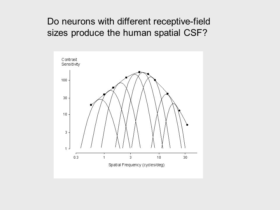 Do neurons with different receptive-field sizes produce the human spatial CSF