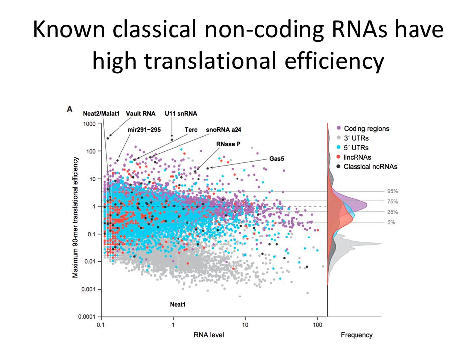 Known classical non-coding RNAs have high translational efficiency