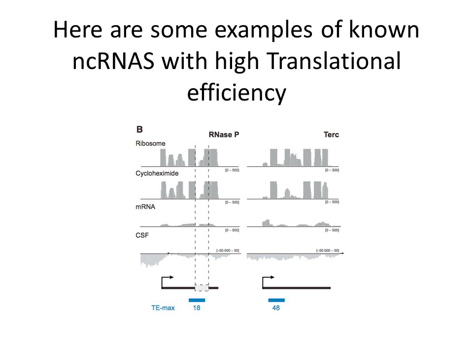 Here are some examples of known ncRNAS with high Translational efficiency