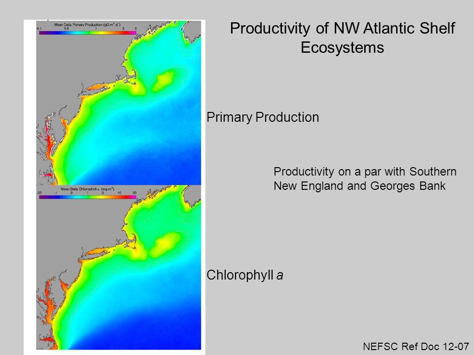 Primary Production Chlorophyll a Productivity of NW Atlantic Shelf Ecosystems NEFSC Ref Doc 12-07 Productivity on a par with Southern New England and