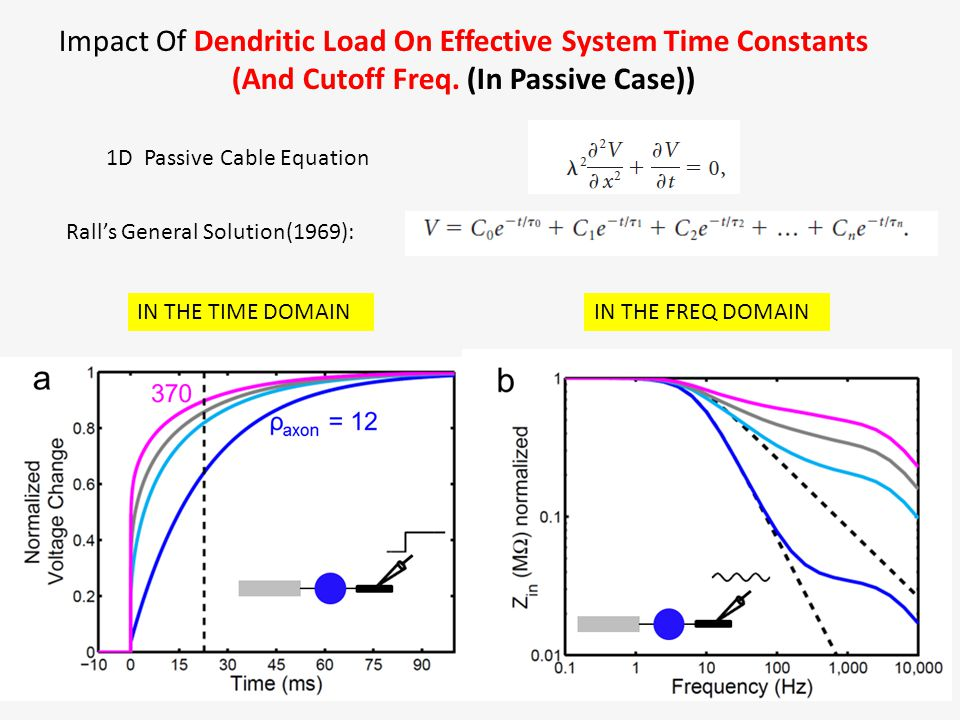 Impact Of Dendritic Load On Effective System Time Constants (And Cutoff Freq. (In Passive Case)) IN THE TIME DOMAIN 1D Passive Cable Equation Rall's G