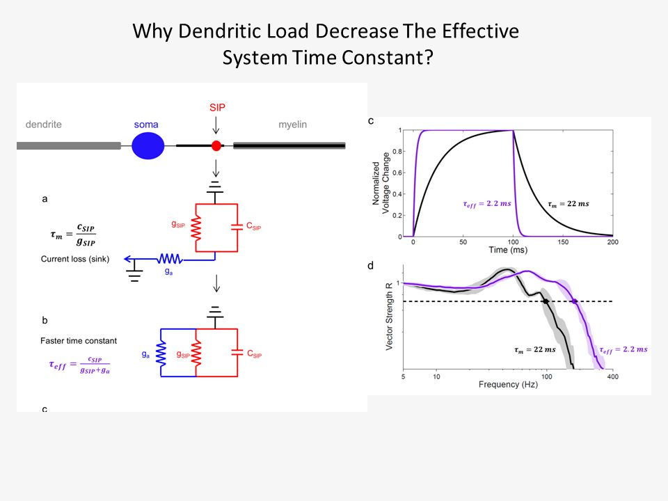 Why Dendritic Load Decrease The Effective System Time Constant