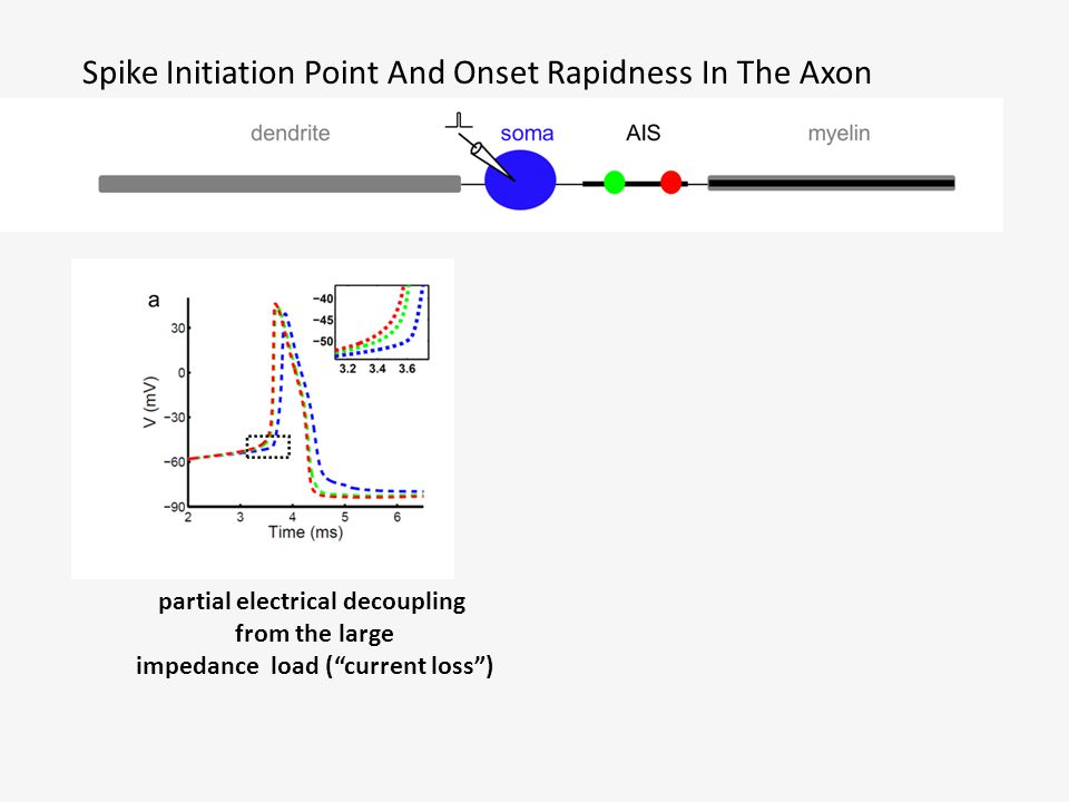 """Spike Initiation Point And Onset Rapidness In The Axon partial electrical decoupling from the large impedance load (""""current loss"""")"""